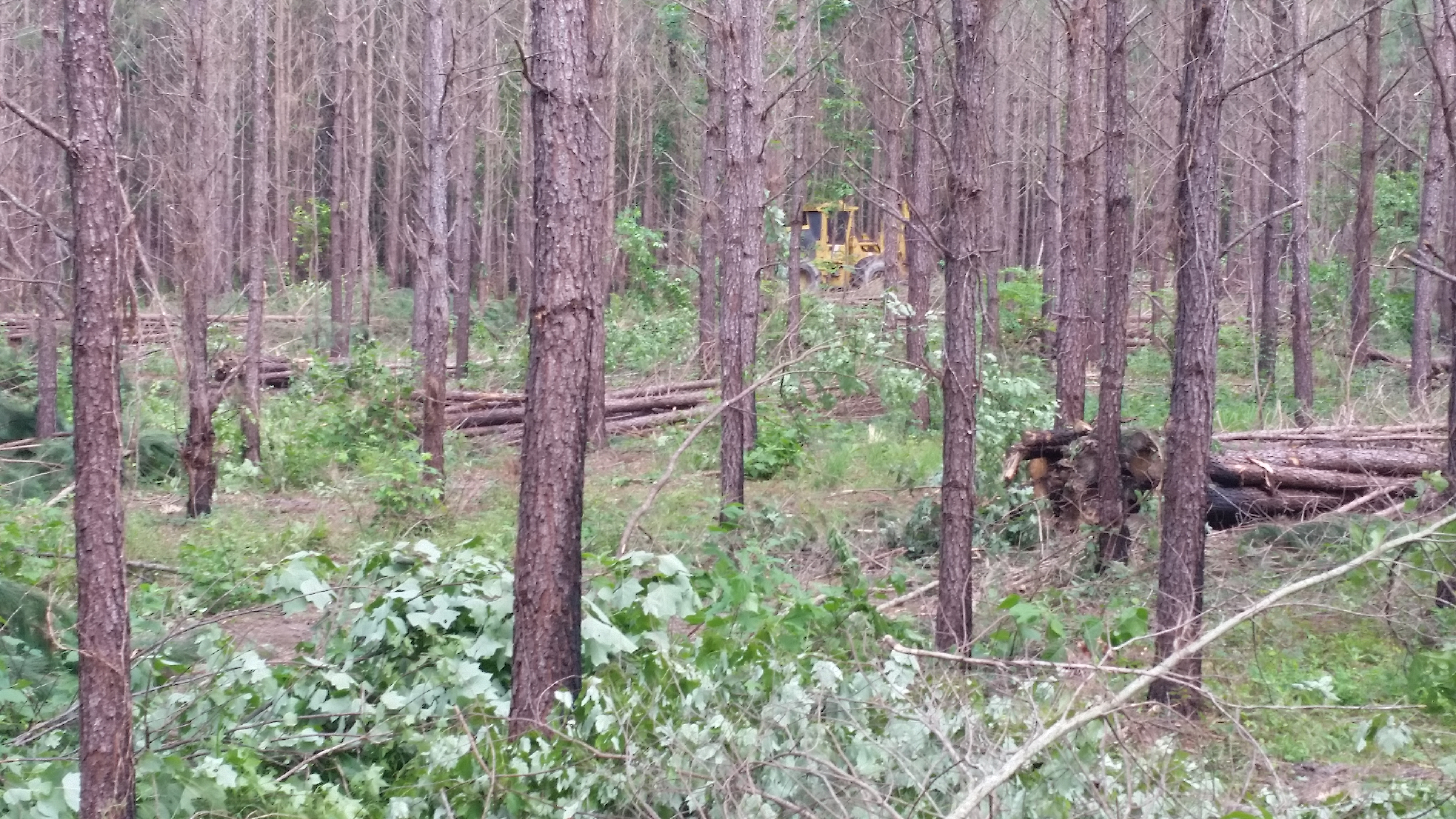 Rock Springs Forestry sells Thinnings for their clients.