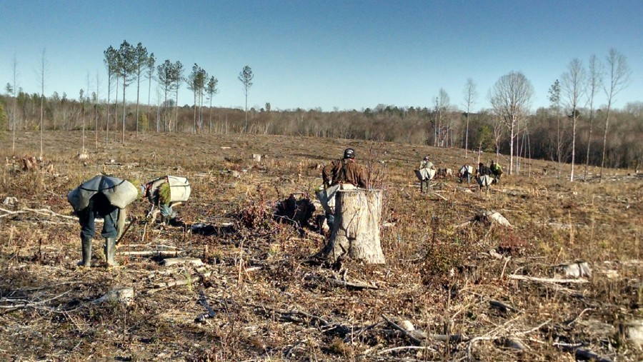 Rock Springs Forestry provides Tree Planting services to its clients.